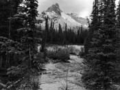 Back Country in Yoho